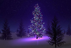 Outside decorated Christmas Tree
