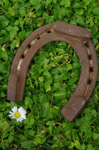 Lucky horse shoe on a field of shamrocks